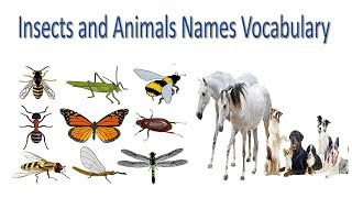 Insects and Animals Names Vocabulary in English | | Animals and Insects Names In English