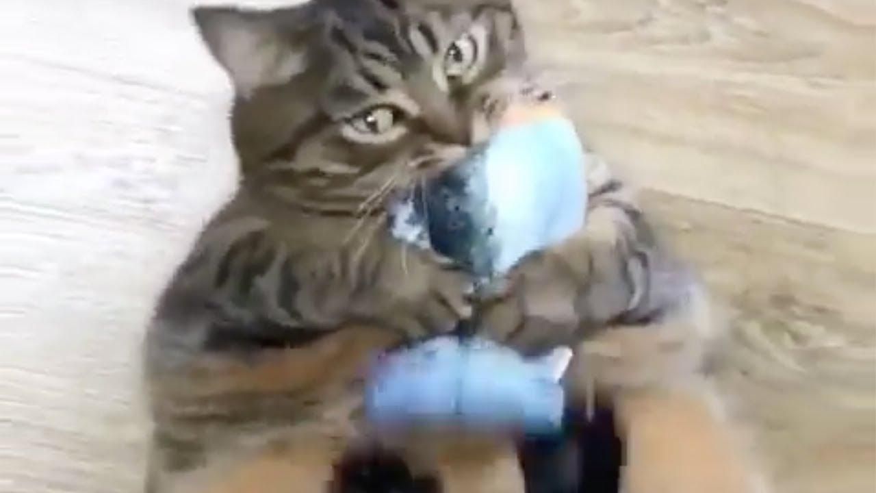 Was Tiere Denken