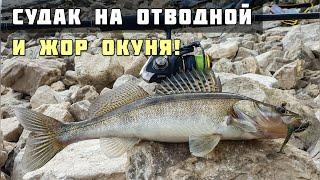 Судак на Отводной Поводок Жор Окуня Спиннинг с Берега рыбалка в Тольятти Док
