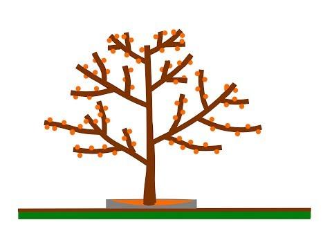 Вопрос: Как произвести весеннею обрезку деревьев?
