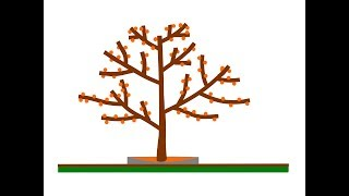 Схема обрезки фруктового сада / Как обрезать формировать фруктовые деревья весной