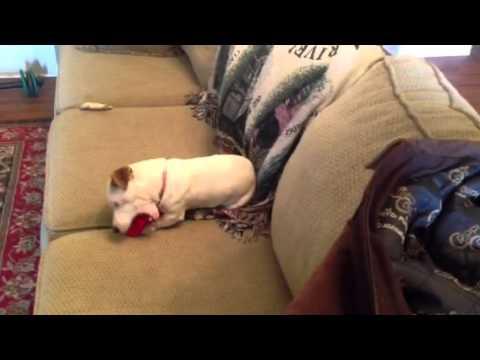 Lutheridge Advanced Part V. 2014Kaynak: YouTube · Süre: 3 dakika57 saniye