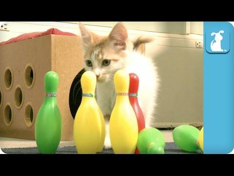 Kitten Bowls A Perfect Game! - Kitten Love