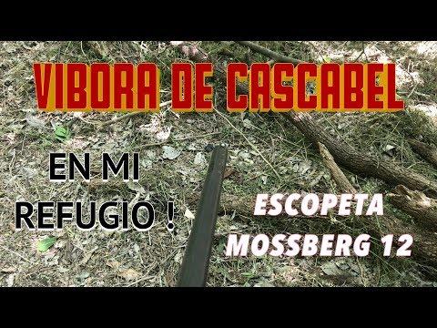 VIBORA DE CASCABEL en mi REFUGIO ! * Escopeta MOSSBERG 500 Calibre 12 * Vlog de Mitabu ( 14/∞ )
