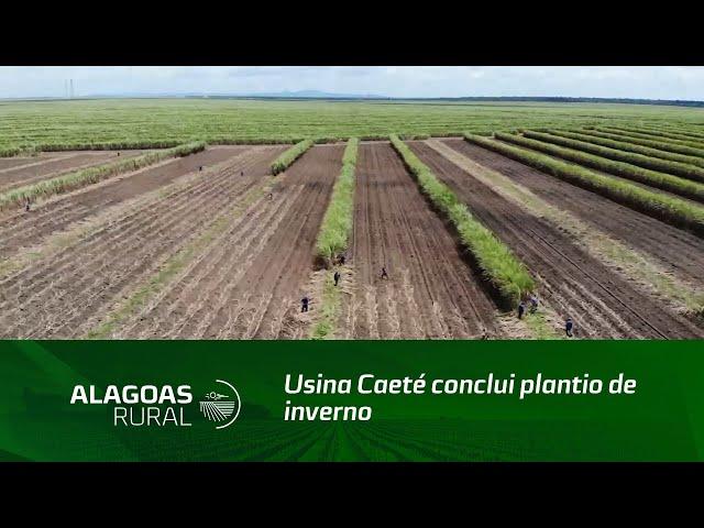 Usina Caeté conclui plantio de inverno com sistema de meiosi