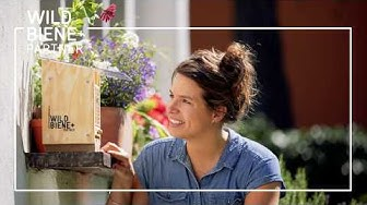 BeeSummer: le bloc de nidifaction pour autres espèces d'abeilles sauvages