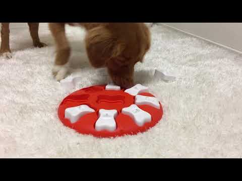 Dog Smart - Nina Ottosson - New
