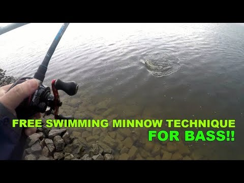 Bank Fishing For Big Bass Free Roam Minnows Technique