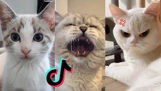 Funny Cat Vines Clean 2020   Cat Tik Tok Compilation