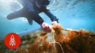 Farming Under the Sea for Japan's Rare Delicacy