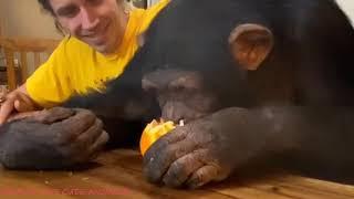 Lovely moments of Sugriva, Vali chimpanzee