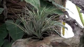 Rainforest Flora TV - Paul Isley - Rainforest Flora Today 05/18/2015