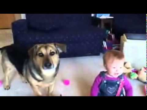 Excited Baby Laugh while playing with Dog