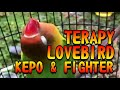 Terapy Lovebird Kepo Fighter  Mp3 - Mp4 Download
