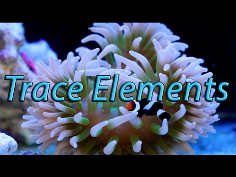 Quick Chemistry: Trace Elements in the Reef Aquarium