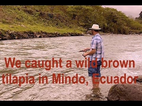 Mindo Ecuador, Cloud Forest River Fishing For New Years