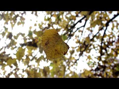 Fake Plastic Trees feat. Malika Ayane
