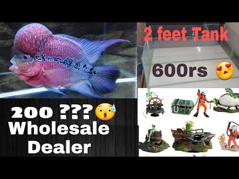 Aquarium Wholesale Fish And Accessories Dealer Buy Fish Tank