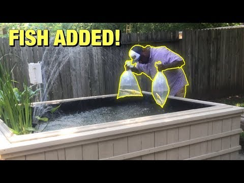 THESE GIANT FISH ARE FOR PONDS ONLY!