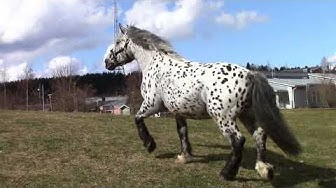 Sirkus Finlandian  hevonen