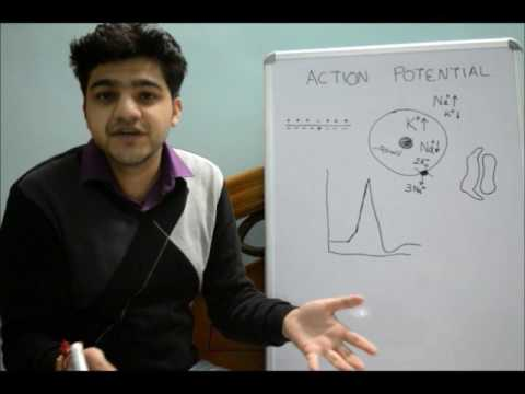 hb105 introductory physiology the action Introduction to pharmacology (lecture)  pharmacologic action  introduction to pharmacodynamics a concentration-response a fundamental principle of .