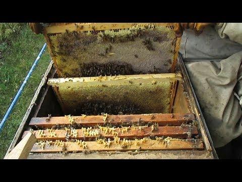 Как формировать пчел в зиму