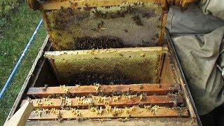 кОГДА собирать гнезда пчел на зиму