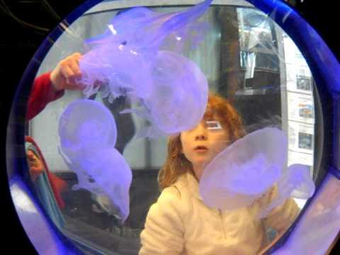 Ty Warner Sea Center Jellyfish