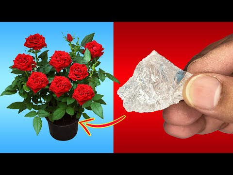 USE THIS IN YOUR GARDEN | 5 POWERFUL USES OF ALUM POWDER IN GARDENING //  FLOWERING & PEST CONTROL