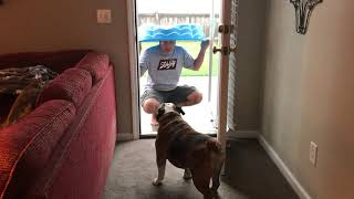 Reuben the Bulldog: Roo vs  The Rain