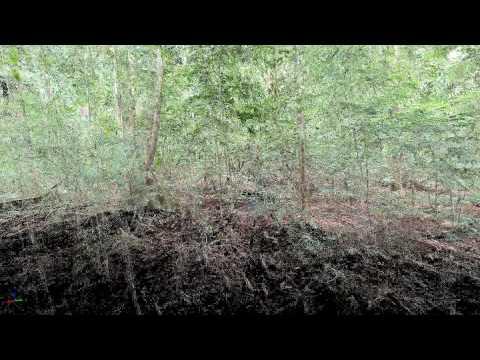 Lope National Park, Gabon: TLS animation of Monodominant forest (LMO-03)