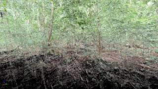Lope National Park, Gabon: TLS animation of Monodominant forest (LMO-03)