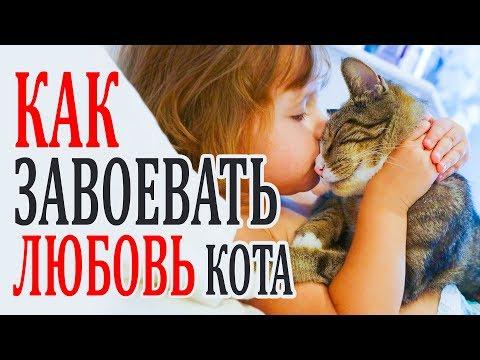 Твоя кошка не любит тебя? Как сделать так чтобы кот тебя любил