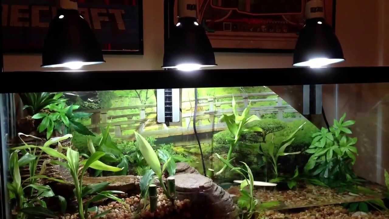 Fish tank terrarium - Aqarium Vivarium W A Viqarium Waterfall Fire Belly Toads Musk Turtle Beta Fish Plants Youtube