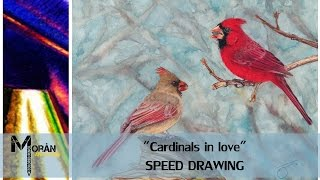 Colored pencil realistic Cardinal birds