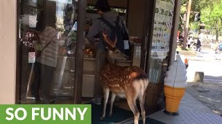 Wild deer waits in line at Japanese ice cream shop