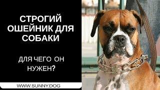 Строгий ошейник для собаки.  Для чего он нужен?