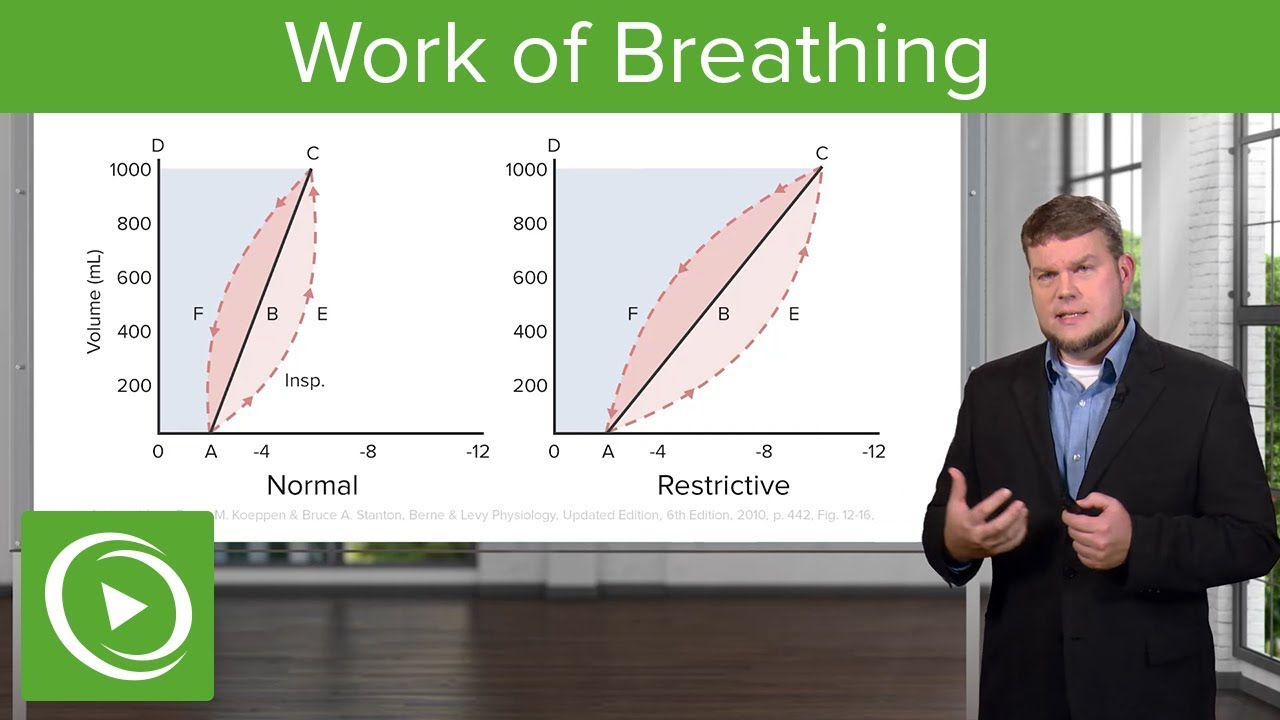 Work of Breathing: Breathing and Lung Mechanics – Physiology | Lecturio