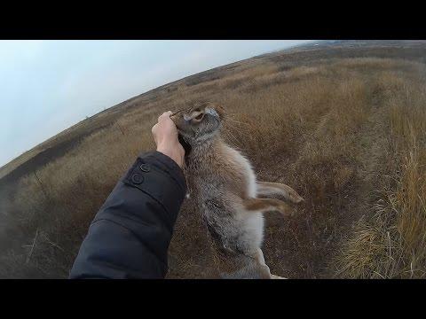 Охота на зайца по чернотропу - Ищем в траве / Hare Hunting In Living Landscape