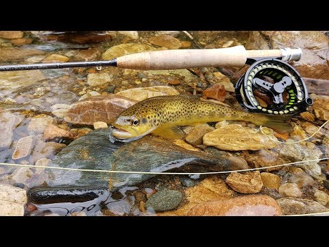 Dry Fly Fishing In Scotland