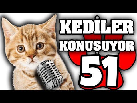 Konuşan Kediler #51 - En Komik Kedi Videoları