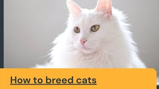 How to breed cats Updated 2021 || How to breed cats at home || How to breed cats in real life
