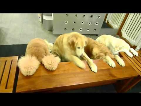 20140402 哈雷哈帝哈威哈樂 - 四隻狗狗吃飯前一起先禱告