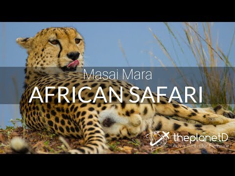 Masai Mara Safari - Tracking the Big 5 on an African Safari