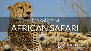 Masai Mara Safari - Tracking the Big 5 on an African Safari