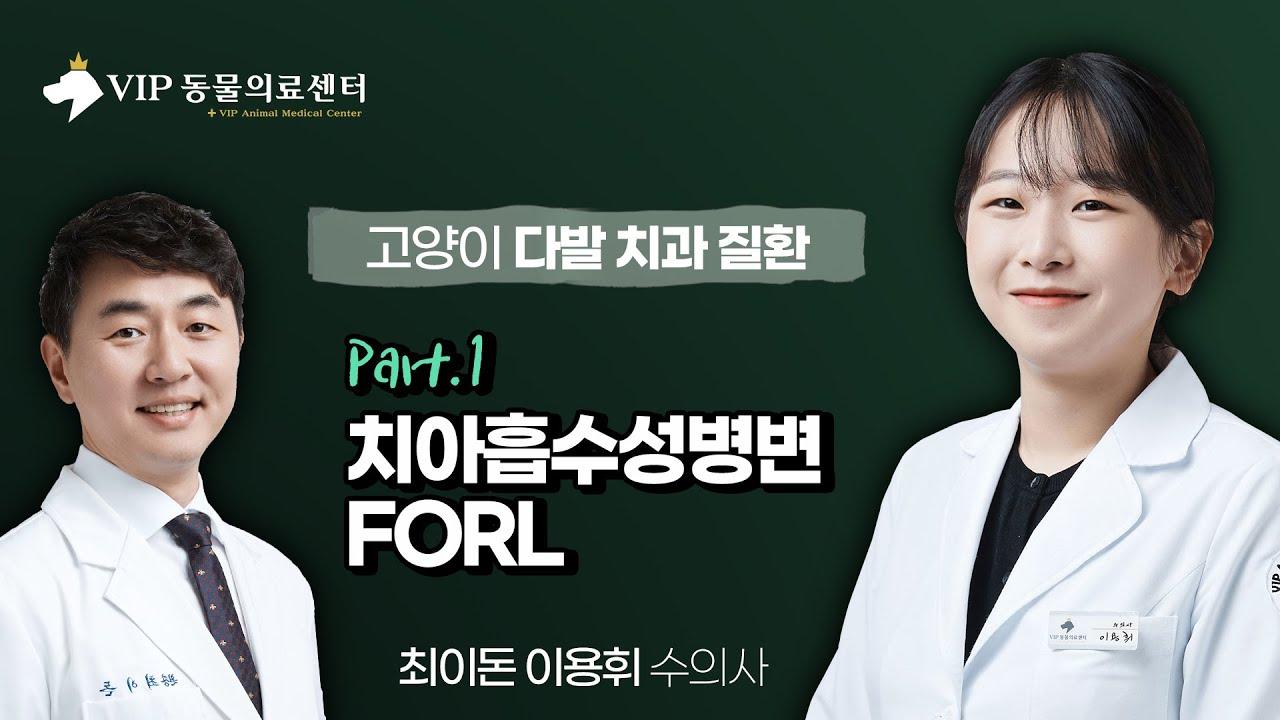 [치과] 고양이 다발 치과 질환 1부(치아흡수성병변, FORL)