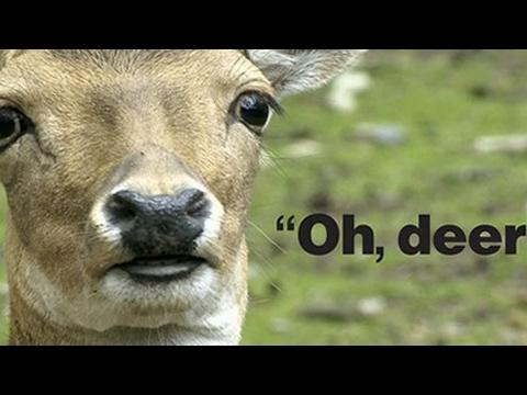 Oh Deer!!! 🦌🦌