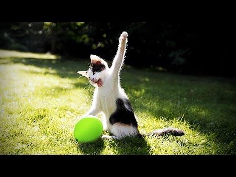 CATS vs BALLOONS 😂 (HD) [Funny Pets]