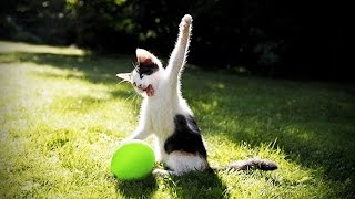 Download CATS vs BALLOONS 😂 (HD) [Funny Pets] Mp3 and Videos
