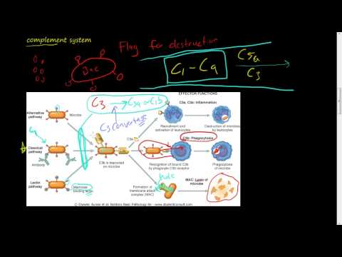 #27  Chemicals of Inflammation  Plasma protein  Complement System, C3, C3a, C5, C5a